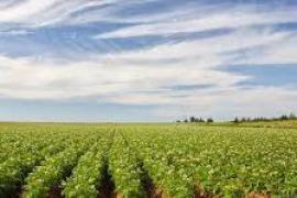 """La terra agricola dell'Ucraina, resa celebre da opere come """"Ogni cosa è illuminata"""""""