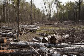 Numero record di danni ambientali nello Stato del Rajasthan in India nel 2015