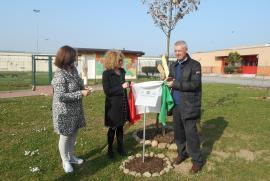 La targa e la quercia in onore di Giorgio Perlasca