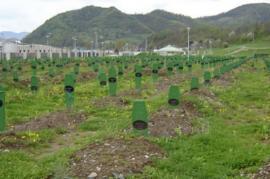 Srebrenica, Memoriale del genocidio in località Potocari (fonte Wikicommons)