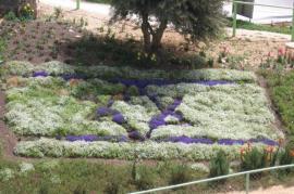 La  bandiera di Israele composta con i fiori (Foto di  אילנה שקולניק ilana shkolnik)