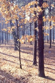 Un'immagine del Parco delle Groane (fonte Wikicommons: utente Robertito1965)