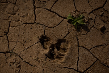 Nuovi flussi migratori a causa dei cambiamenti climatici