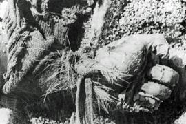 Una delle foto rese pubbliche dalla Commissione Interamericana