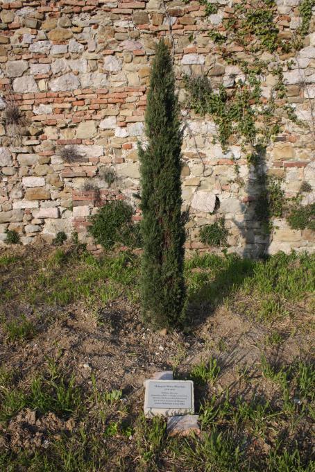 l'albero per Wangari Muta Maathai