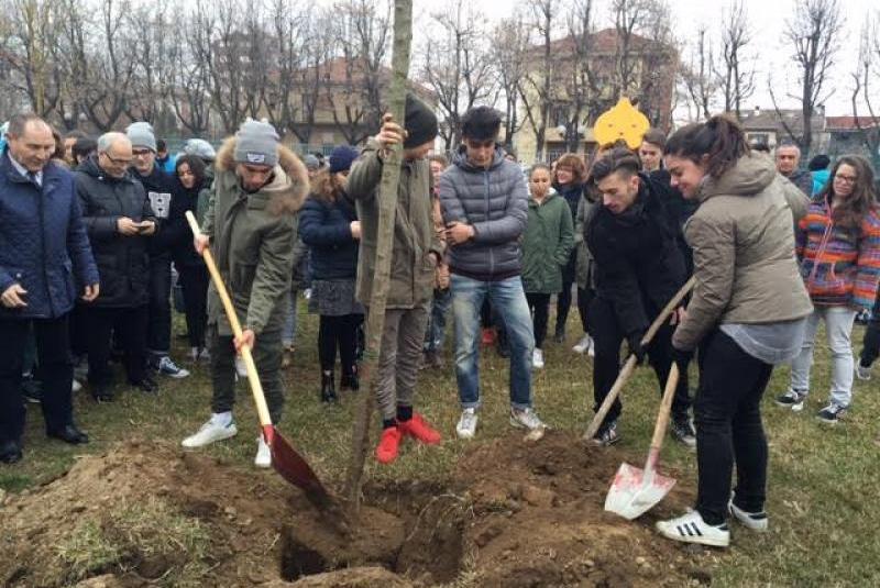 Gli studenti di Vercelli durante la piantumazione dei ciliegi