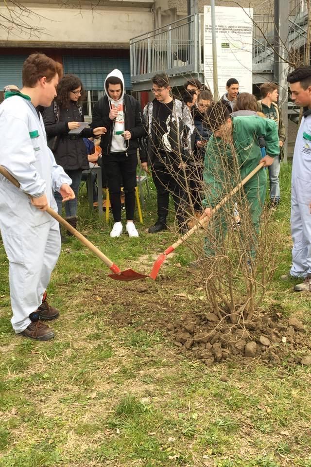 """Gli studenti dell'ITS """"I.Calvi"""" durante la piantumazione dell'albero in onore di Don Benedetto Richeldi"""