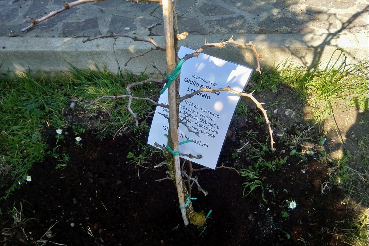 albero dedicato a Giulio e Stella Levorato