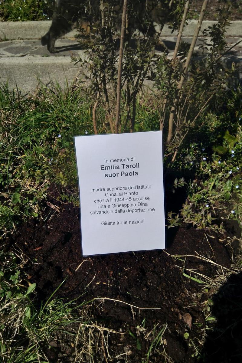 albero dedicato a Emilia Taroli, suori Paola