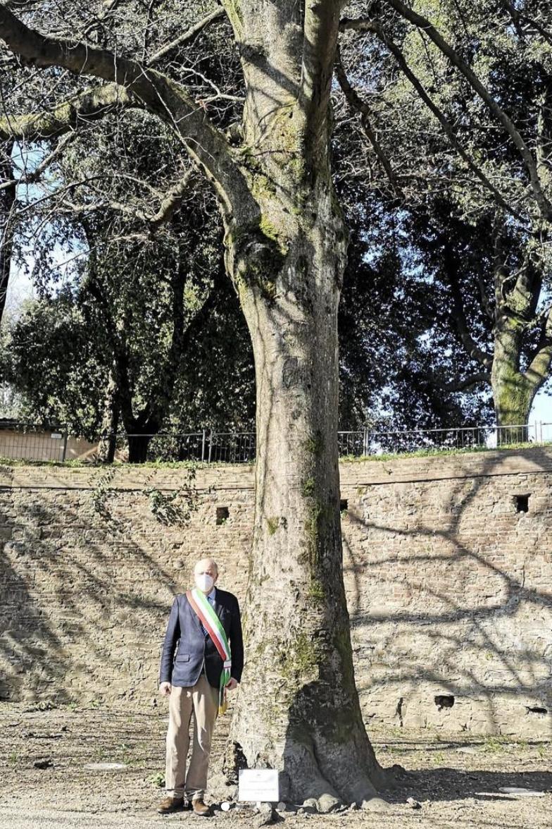 A Lucca un bellissimo albero per Jacqueline Mukansonera
