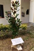 L'albero di magnolia dedicato a Giorgio Perlasca e Giovanni Palatucci.