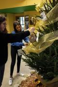 Creando l'albero dei Giusti