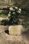 Il viburno dedicato a  Maria Coggiola