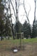 L'albero dedicato a Sacharov