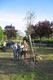 Le figlie di Ezio Giorgetti e di Osman Carugno accanto alle querce dedicate ai loro padri